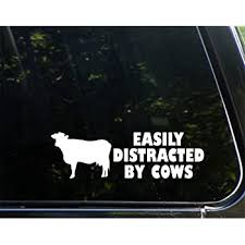 Amazon Com Sweet Tea Decals Easily Distracted By Cows 8 3 4 X 2 3 4 Vinyl Die Cut Decal For Windows Trucks Cars Laptops Glasses Mugs Etc Automotive