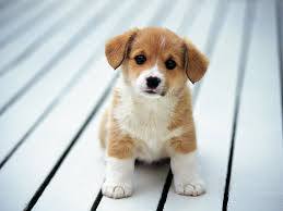 74 cute dog wallpapers on wallpaperplay