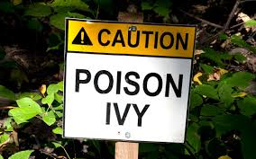 poison ivy oil last on clothes