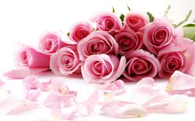 rose flower wallpapers top free rose
