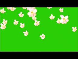 flower falling green screen video