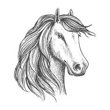 Paard Tekening Foto S Afbeeldingen En Stock Fotografie 123rf
