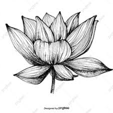 black white flowers png