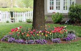 yard with flower bulbs