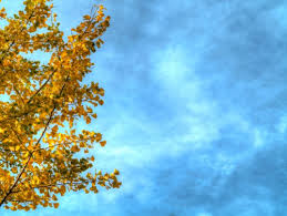 autumn branches with leaves sky background