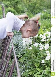 Child Sniffs Flowers Across A Fence Stock Image Image Of Enjoyment Female 117332931
