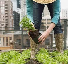 10 secrets to a bountiful veggie garden