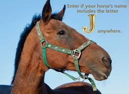 is your horse sporting a py halter
