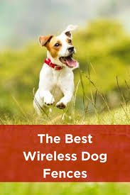 Best Wireless Dog Fences In 2020 Wireless Dog Fence Dog Fence Invisible Fence