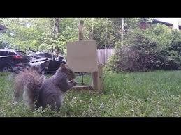 squirrel trap diy catch alive trap