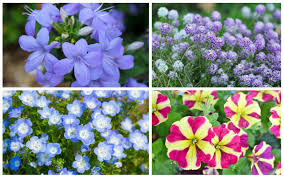 plants that grow in partial shade