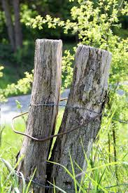 Pile Pasture Meadow Willow Stake Willow Stake Nature Wooden Posts Cc0 Public Domain Royalty Free Piqsels
