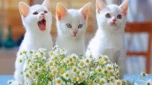 wallpaper wallpaper cute cats