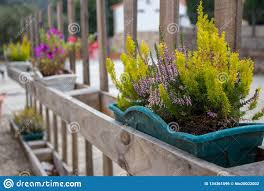Green Grass And Blooming Flowers In Flower Pots On Fence Flower Containers On Wooden Fence In Perspective Terrace Design Stock Photo Image Of Nature Home 134361096