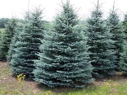 utah trees for the tree center