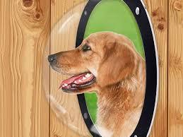 H B Luxuries Acrylic Dome Dog Window Review