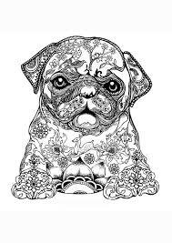 Kleurplaat Volwassenen Mopshond Pug Kleurplaten Mopshond