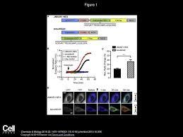 Charlene Depry, Sohum Mehta, Ruojing Li, Jin Zhang Chemistry & Biology -  ppt download