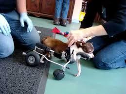 dog wheelchair for back legs set of