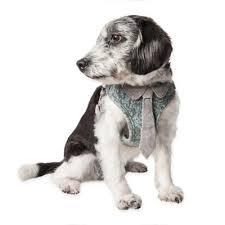 Premier Pet In Ground Add A Dog Collar In Black Bed Bath Beyond
