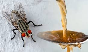 how to get rid of fruit flies make