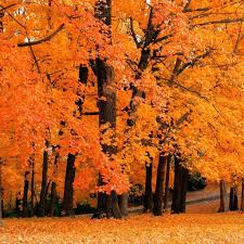fall background gallery 531749169