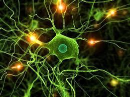 Aida. La complejidad del cerebro, nuestra presencia en el Universo ...