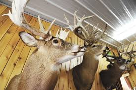 Deer Farms Thriving In Ohio Ohio Ag Net Ohio S Country Journal