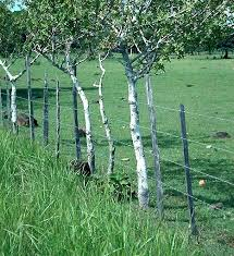 Living Fences For Agroforestry In Africa Living Fence Fence Forest Resources