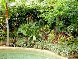 temperate climate tropical garden