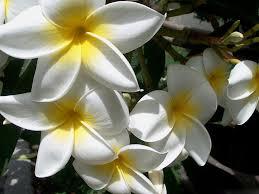 خلفيات أزهار طبيعية شبكة الشفاء للرقية الشرعية