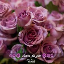 Violette الورد البلدي Violette Violettips Flowers