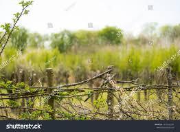 Closeup Hand Woven Garden Fence Using Stock Photo Edit Now 1375992281
