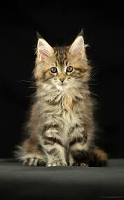 1600x2560 القطط Phablet خلفيات الهاتف 7386773