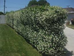 Plants To Cover A Chain Link Fence The Smarter Gardener