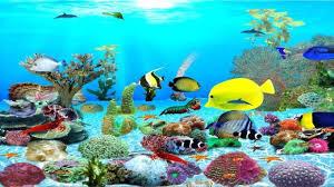 fish tank wallpaper live qbatq1m