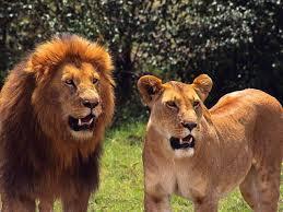 اجمل صور حيوانات مفترسه خلفيات لاخطر الحيوانات فى العالم شوق وغزل