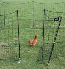 Movable Fencing We Have This Fence For Our Chickens And It Is Durable And Easy To Reconfigure When You Need To W Chicken Fence Chickens Backyard Chicken Coop