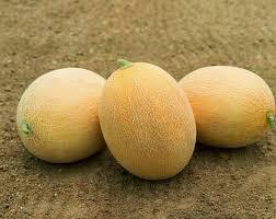 Ananas F1