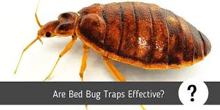 are bed bug traps effective a helpful