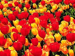 صور ورد جميل في باقات زهور مميزة ميكساتك