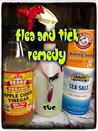 diy flea treatment vs brand vs