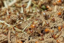 32+ Winged Ants Bugs That Look Like Flying Termites Images