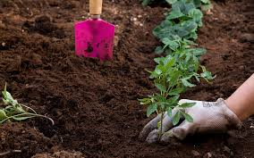 how to start a vegetable garden the