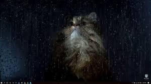 rainy window cat live wallpaper