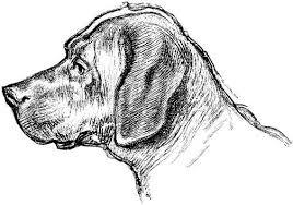 Honden Plaatje Zwart Wit Honden Animaatjes Nl