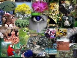 Cuántas especies hay en el planeta?