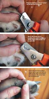 keeping your dog s feet healthy whole