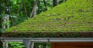 remove moss on your outdoor surfaces
