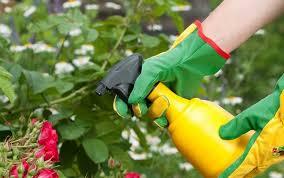 simple homemade pesticides and vermin